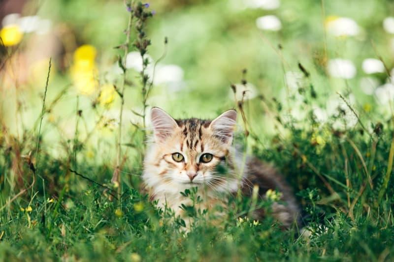 cat and pollen