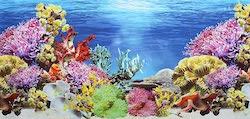 Pistachio Pet Double Sided Aquarium Poster Background