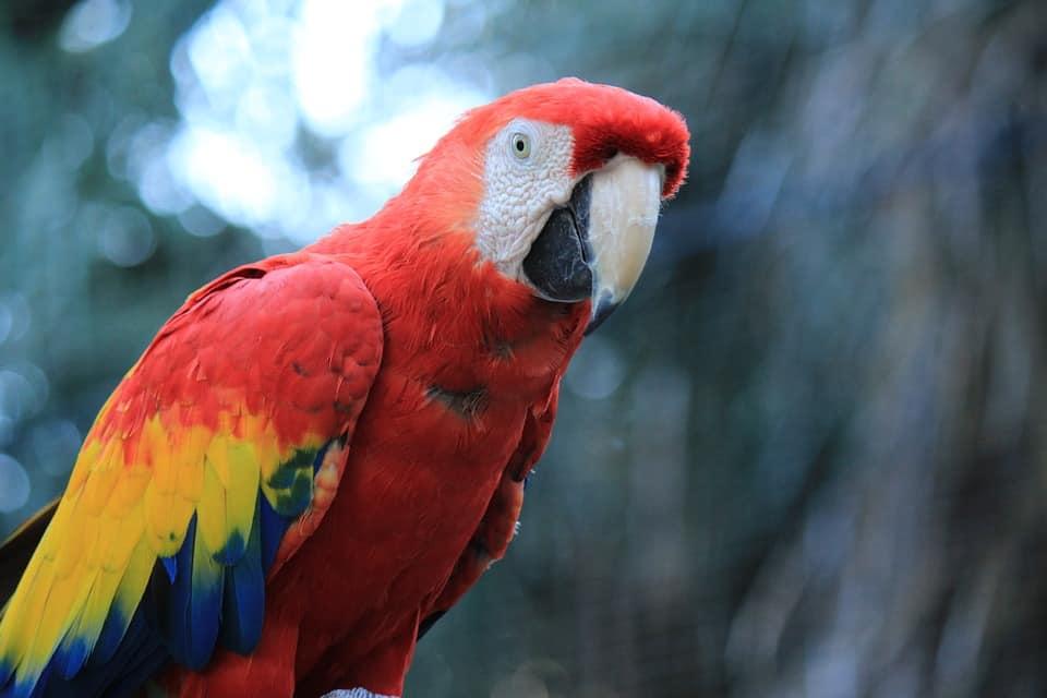 oldest parrot alive