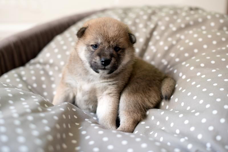 unvaccinated puppy in lockdown