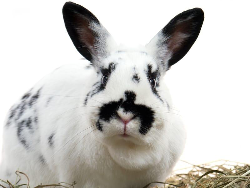 bunny rabbit diet