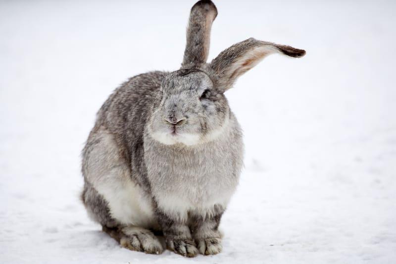 rabbit environment