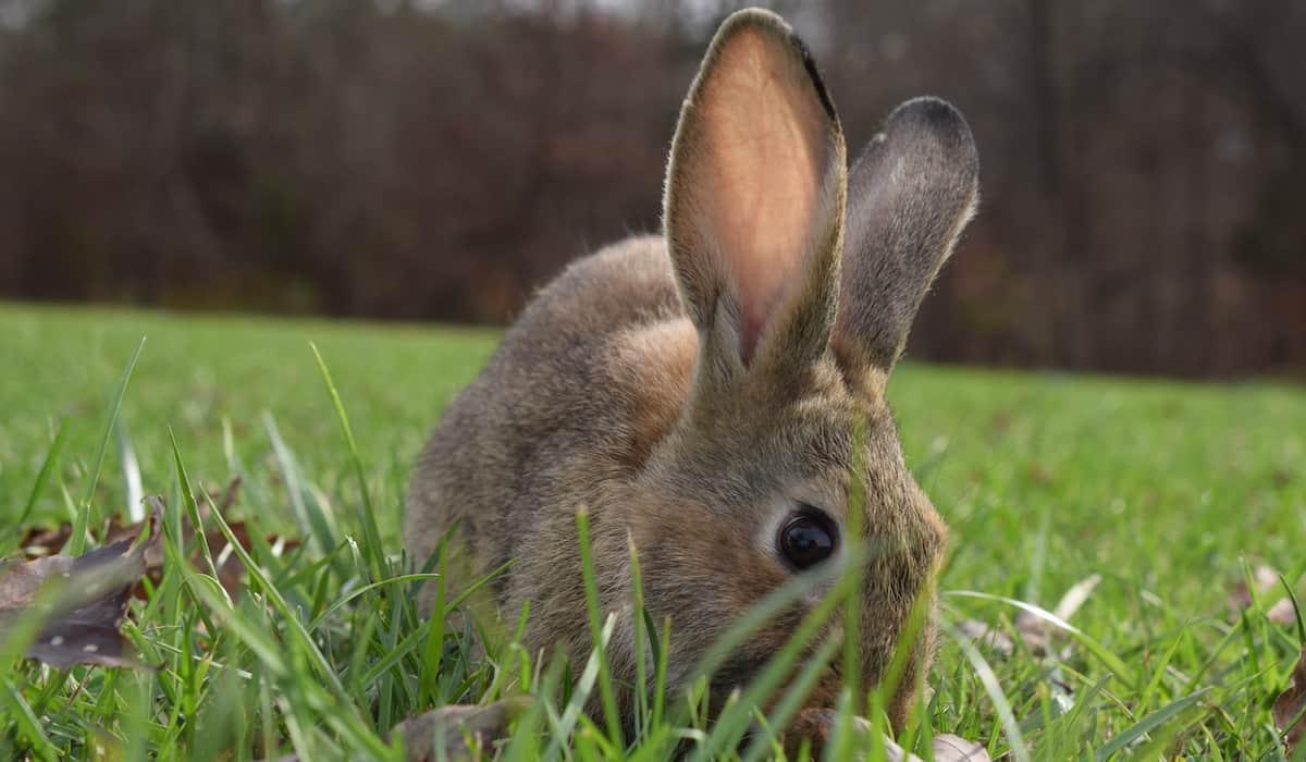 rabbit outside