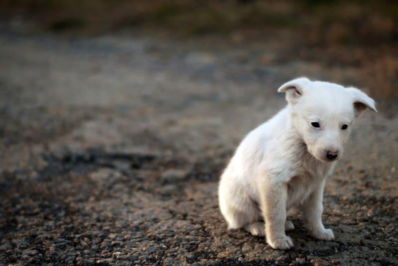 abandoned puppy coronavirus
