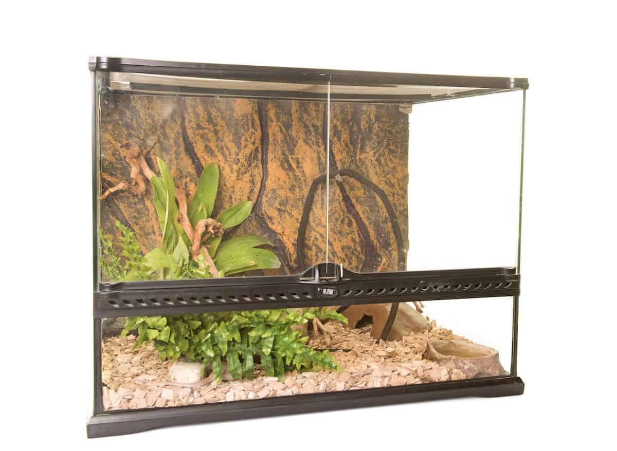 a glass reptile terrarium