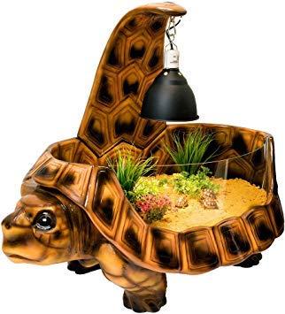 Vividarium Tortoise Home