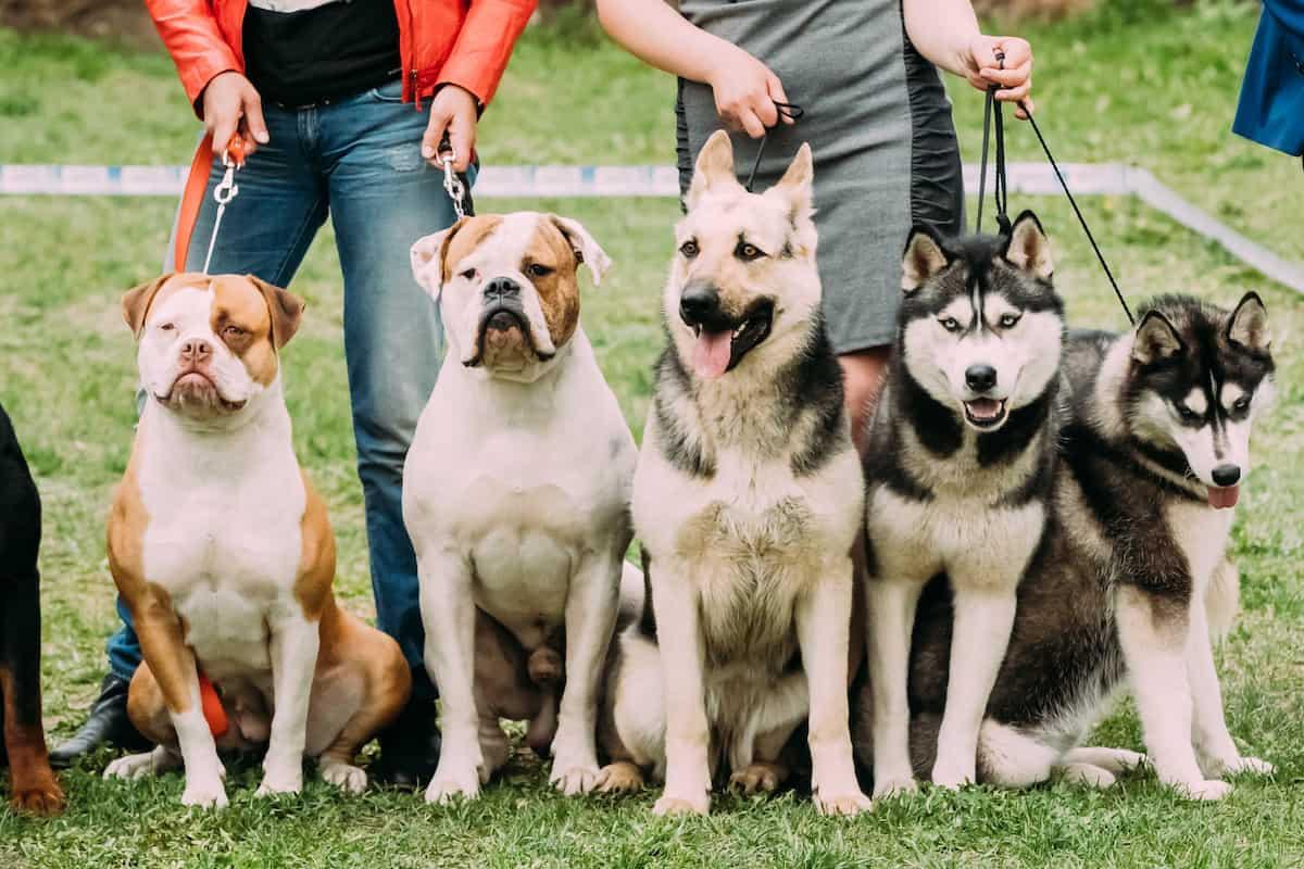 group of dogs sitting on their owner's feet