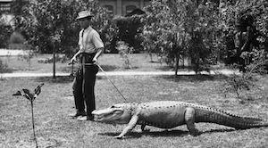 Vintage Alligator Photo