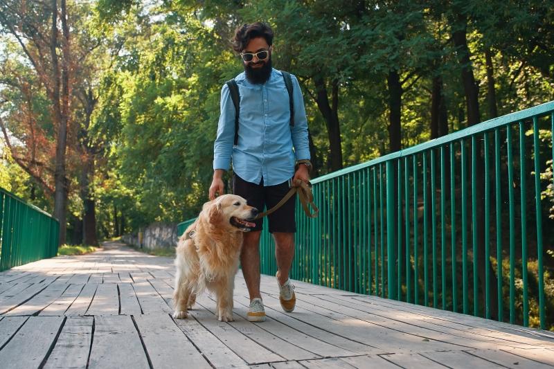 walk your dog in lockdown