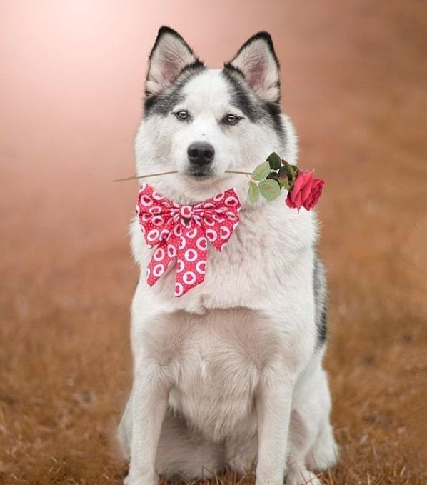 wet nosed pup ties