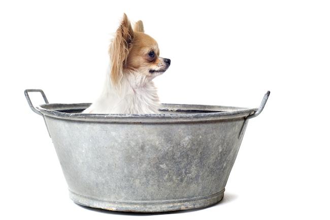 dog bath tubs