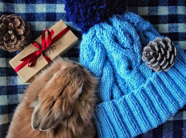 do pets need christmas presents